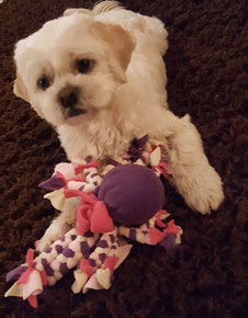 Hundespielzeug, Fleecespielzeug, Krake, Hunde, Hundeball, Ball