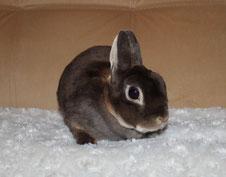 купить-кролика-карликового-ярославль