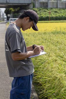 前回、同行させていただいた7月には「草丈」「茎数」の調査だった。今回、長さの所は「稈長」と「穂長」に分けられ、また「穂数」が調べられる。