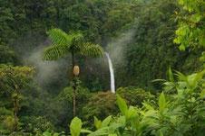 Arenal Combo: Hanging Bridges & La Fortuna Waterfall.