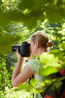 Beste Zeit für Vogelbeobachtung in Thailand