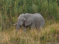 Elefantenbesuch in der Palmwag Lodge