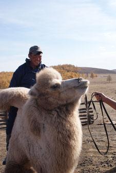 Nomade guide en chameau