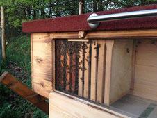 Bienenhaus mit Fenster