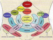 Les zones réflexes Energético-organiques des Taoïstes.