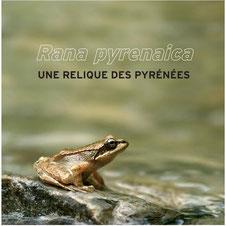 reptiles Pyrénées Atlantiques montagne faune protection jean-Louis Soulé mémoire de terrain Pays basque Béarn biodiversité photographies