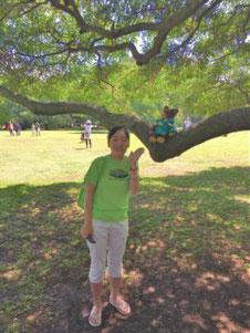 貸切観光ツアーにてハワイオアフ島のモアナルアガーデンモンキーポッド、日立の木の枝にクマのぬいぐるみとお客様