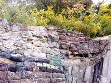 """""""Geologische Wand"""" im Botanischen Volkspark Blankenfelde Nord-Berlin. Foto: Helga Karl"""