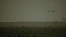 Monochrome, Landschaft , Vorpommern , Kranichzentrum , Kraniche , Herbst , Jahreszeit , Landscape , Ostsee , Felder , Nature , Vögel , Birds , Germany