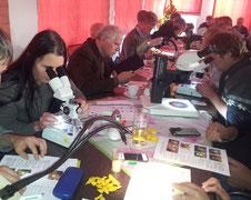 Die Seminarteilnehmer waren bei der Bestimmung der verschiedenen Insektenarten unter der Binokularlupe gefordert.