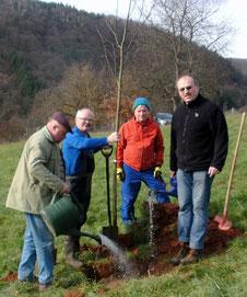 Lindenpflanzung in Dernbach