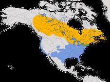 Karte zur Verbreitung der Weißkehlammer (Zonotrichia albicollis)