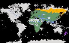 Karte zur Verbreitung der Ammern (Emberizidae)