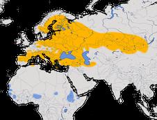 Karte zur Verbreitung des Ortolan (Emberiza hortulana)