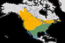 Karte zur Verbreitung des Braunkopf-Kuhstärlings (Molothrus ater)