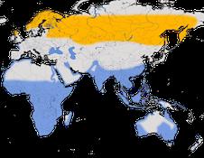 Karte zur Verbreitung des Grünschenkels (Tringa nebularia)