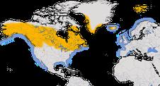 Karte zur Verbreitung der Eistaucher (Gavia immer)