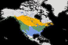 Karte zur Verbreitung der Singammer (Melospiza melodia)