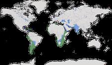 Karte zur Verbreitung der Flamingos