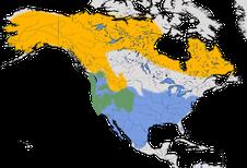 Karte zur Verbreitung der Dachsammer (Zonotrichia leucophrys)