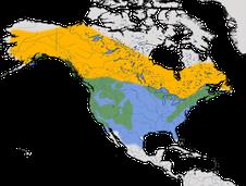 Karte zur Verbreitung der Winterammer (Junco hyemalis)