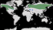 Karte zur Verbreitung des Bartkauzes (Strix nebulosa)