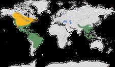 Karte zur Verbreitung der Vireos (Vireonidae)