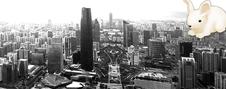 Город небоскребов и ночных круизов