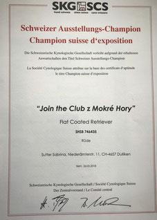 Schweizer Ausstellungs-Champion