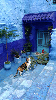 モロッコ/シャウエン/猫と青い背景が良く似合います。