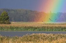 Kranichflug in den Regenbogen