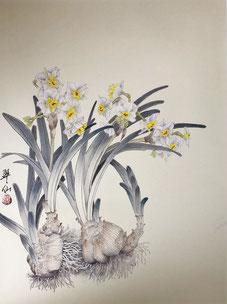 「水仙の花:F6 35x45」水仙の花も根っこは見られませんが、想像するとこんなにエネルギッシュなんですね。左側に寄っているのは更に動きを見せる為です。
