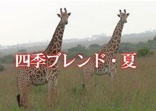 四季ブレンド・夏