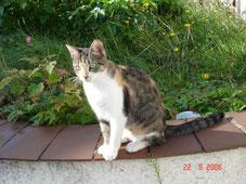Tchinette chatte du voisin