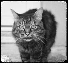 Ecole du chat neuvecelle histoire