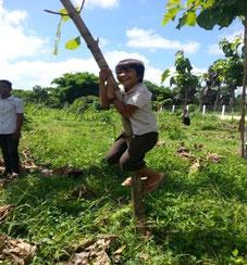 大きく育った木に登って遊べるよう になりました!