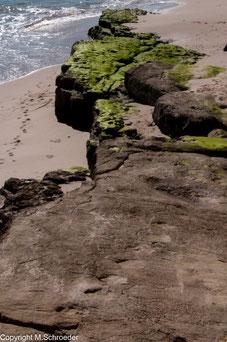 Saurierspuren am Strand