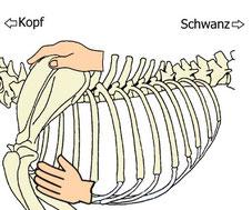 Notfalltipp bei Schmerz Hund Rücken und Bauch abstreifen zur Entspannung bei Schmerzen
