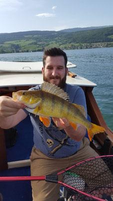Egli, barsche, fischen, bielersee, angeln, hecht, fischerboot, guiding, finesse, perch, wobbler, Seefischer, Boot, Flussbarsche, Flachwasser