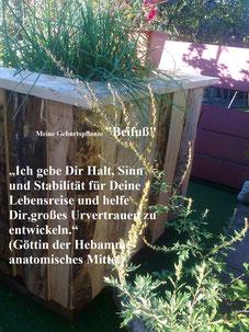 spagyrische Pflanze Nr.: 12 Beifuß (Artemisia vulgaris)