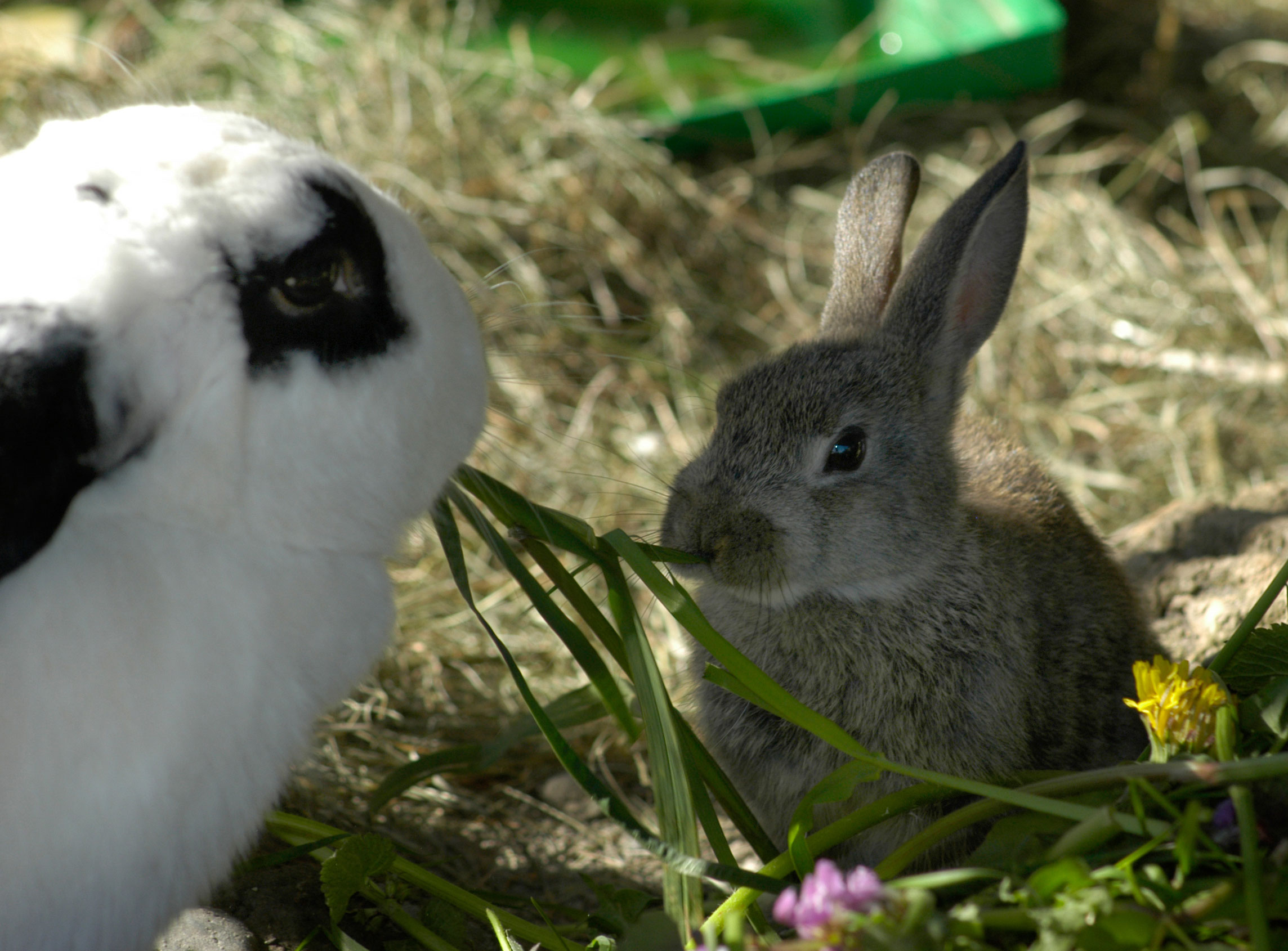 Kaninchen - tsv-krems Webseite!