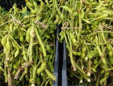 天日乾燥中の稲