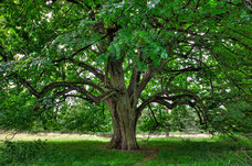 Landschaft, Naturfotografie, Baum