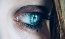 Auge, Lider, sehen