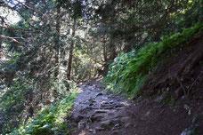 Montée en forêt au lac Crozet. Le chemin mériterait d'être renforcé