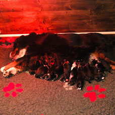 LITTERS/PUPPIES