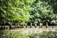 La venise verte en été avec des potaux en bois Marais Poitevin Région Nouvelle-Aquitaine France Europe photo par Marie Deschene photographe Pakolla