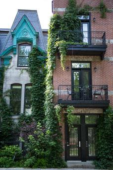 Maisons du Quartier Le Plateau-Mont-Royal pendant l'été à Montréal photo prise par Marie Deschene photographe pour Tourisme Montréal