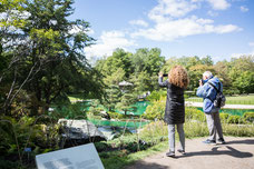 Two person are taking photos during their visit to the Montreal Botanical Garden photo taken by Marie Deschene photographer for Pakolla