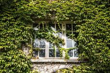 Fenêtre en bois d'une maison recouverte de lierre dans un village de France Europe photo par Marie Deschene photographe Pakolla